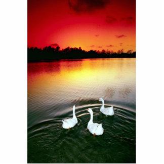 Swan lake sunset, Central Park, Huntington Beach, Cutout