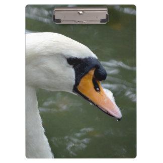 Swan looking right head view bird image clipboard