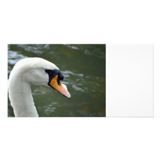 Swan looking right head view bird image photo card