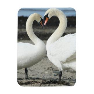 Swan Love  Premium Magnet Rectangle Magnets