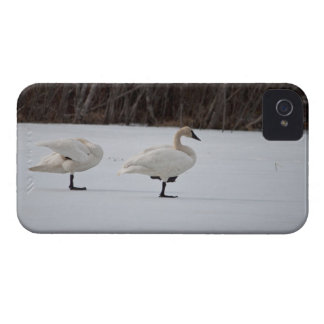 Swan Magicians Case-Mate iPhone 4 Case