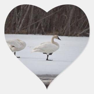 Swan Magicians Heart Sticker