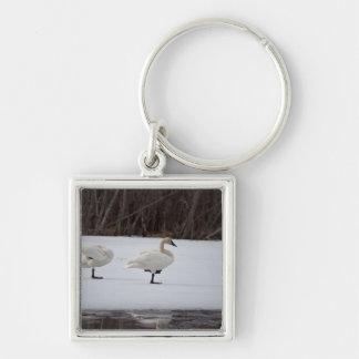 Swan Magicians Keychain