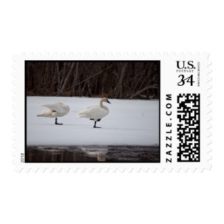 Swan Magicians Postage