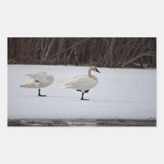 Swan Magicians Rectangular Sticker