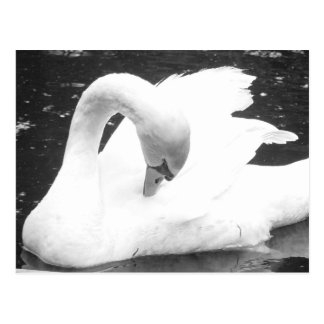 Swan of the Lake--Black and White Postcard