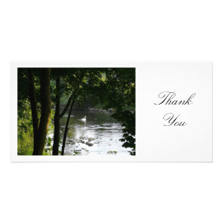 Swan on a River - Thank You Card