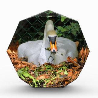 Swan on its nest award