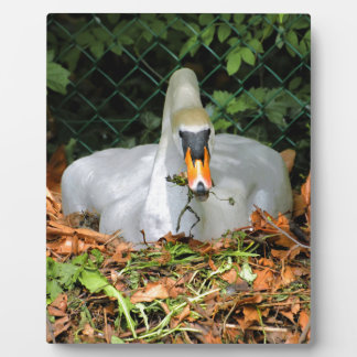Swan on its nest plaque