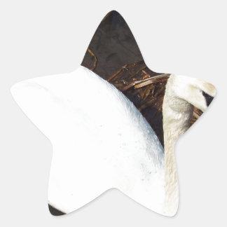 Swan on  Lake Star Sticker