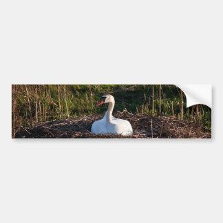 Swan on nest bumper sticker