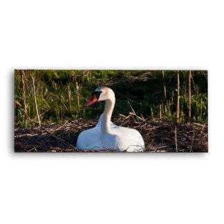 Swan on nest envelopes