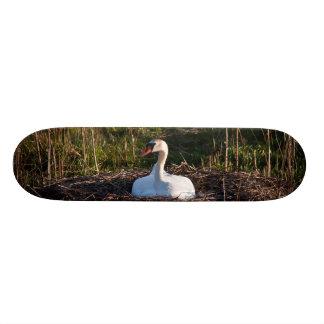 Swan on nest skateboards
