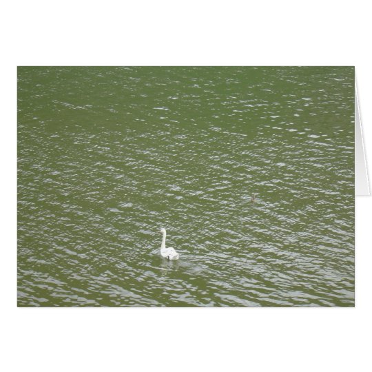 Swan on the Mosel Card