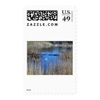 Swan On Tikvara Lake Stamp