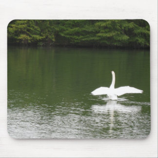 Swan on Town Lake Mouse Pad