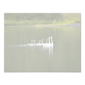 Swan Pair with Gygnets on Pond Personalized Invites