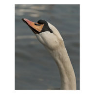 Swan Post Cards