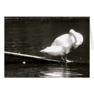 Swan Preening Note Card By Brad Hines