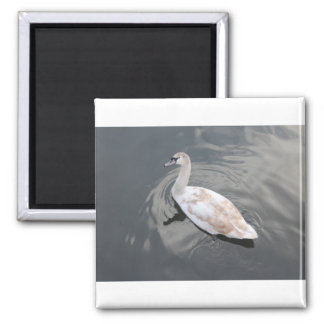 Swan product magnet