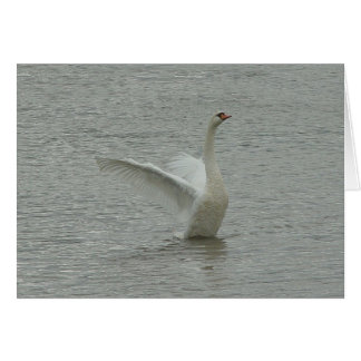 Swan-ready to fly card