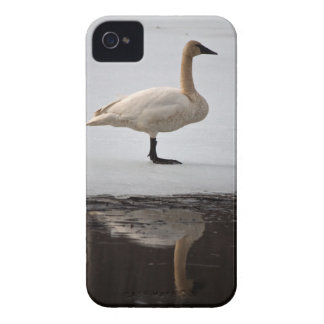 Swan Reflected iPhone 4 Case