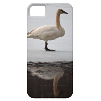 Swan Reflected iPhone SE/5/5s Case