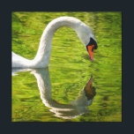 "Swan Reflection Canvas Print<br><div class=""desc"">A Mute Swan ponders its own image in the water of the Pawtuxet River.</div>"