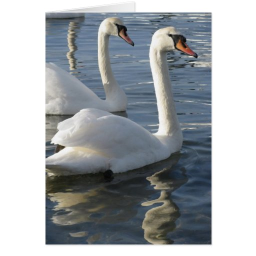 Swan Reflections Greeting Cards