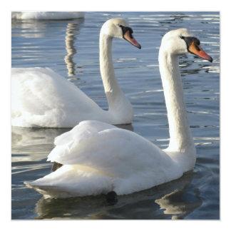 Swan Reflections Invitations