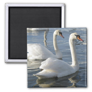 Swan Reflections Magnet Magnet