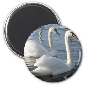 Swan Reflections Magnet Fridge Magnet