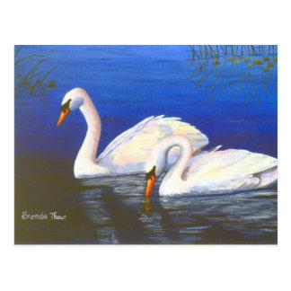 Swan Reflections Postcard