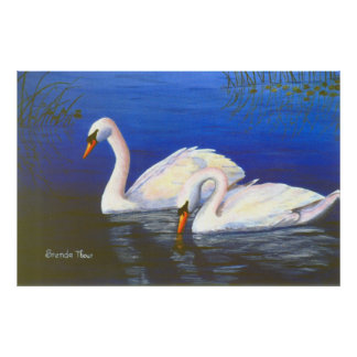 Swan Reflections Poster Print