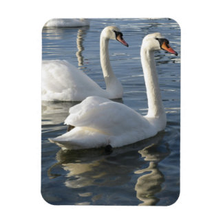 Swan Reflections Premium Magnet Magnet