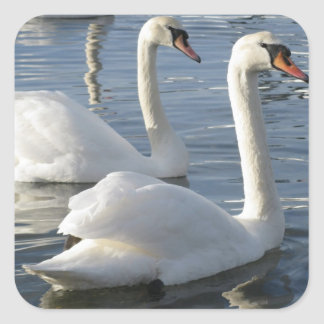 Swan Reflections Stickers