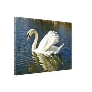 Swan Reflections ~ Wrapped Canvas Print