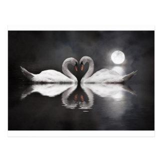 Swan romance postcard