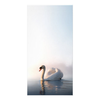 Swan Sunrise Photo Card