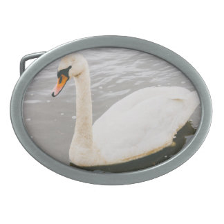 Swan Swimming In A Lake, Animal Photograph Oval Belt Buckle