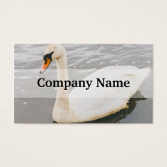 Swan Swimming In A Lake, Animal Photograph Business Card at Zazzle