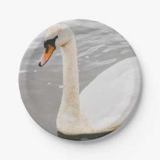 Swan Swimming In A Lake, Animal Photograph Paper Plate