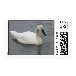 Swan Swimming Postage