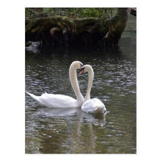 Swan Wedding Love Peace Hope Water Lake Park Postcard