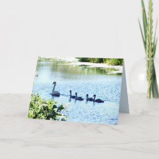 Swan With Cygnets on River Card