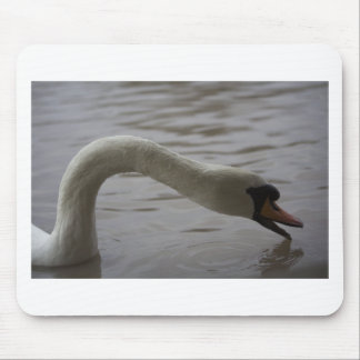 Swan with outstretched neck mouse pad