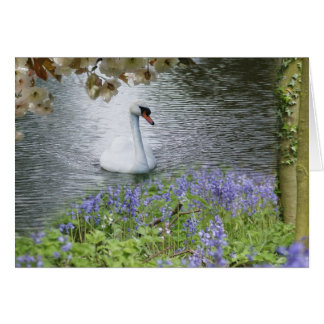 Swan  Woodland And Blossom Blank Note Card