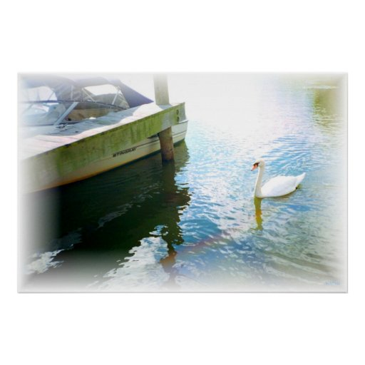 Swanboat Poster