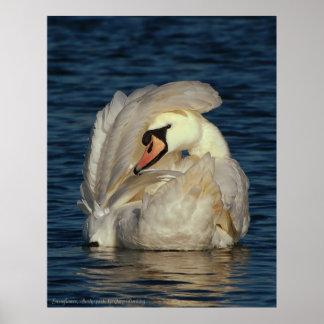 Swanflower, by Gary Dorking Poster