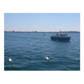 Swans and Boat Postcard